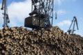 Индия отберет российский лес уКитая